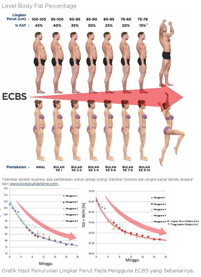 Level Body Fat Percentage